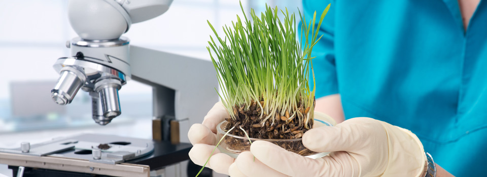 grass grown in laboratory
