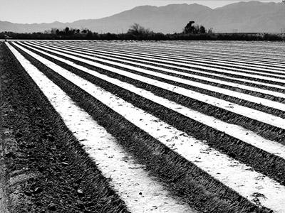 Ploughed Field Coachella