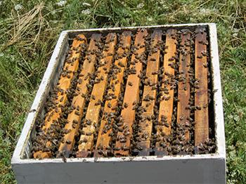 petrochemical bee hive
